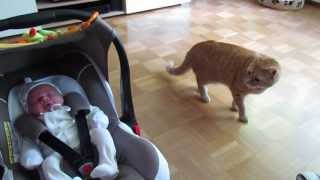 cat meets baby first time