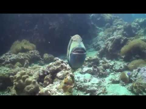 TRIGGER FISH ATTACK  Sail Rock 19 August 2014 Underwater video