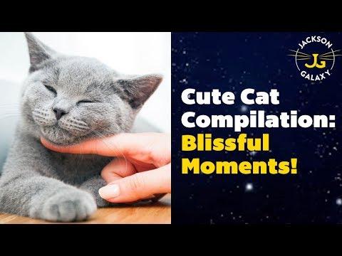 Cute Cat Compilation: Blissful & Beautiful!