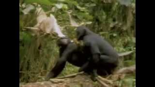 wild animals Animals Make Love or mating breeding,