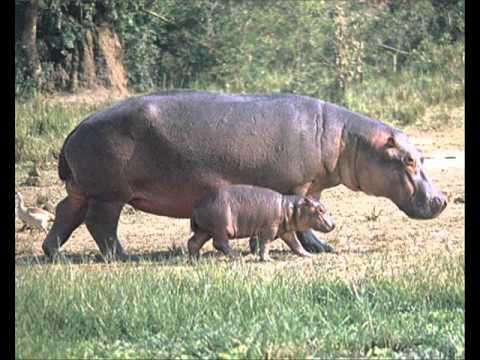 Sa Invatam Animalele Part 2 Animalele Salbaticewmv