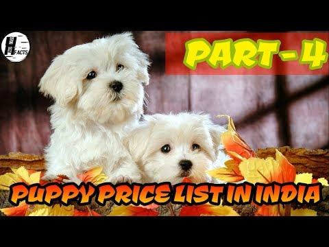 Dog Price List in INDIA | PART - 4 | PRICE LIST | HINGLISH FACTS