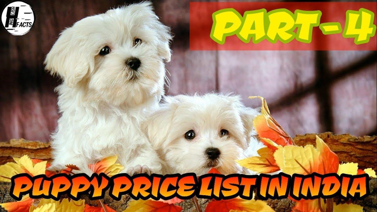 Dog Price List In India Part 4 Price List Hinglish Facts
