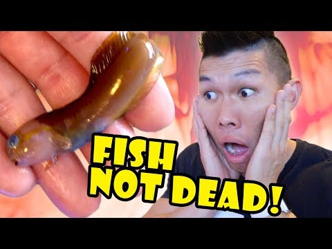 Missing FISH Found! Mystery Solved - NOT Dead || Life After College: Ep. 622