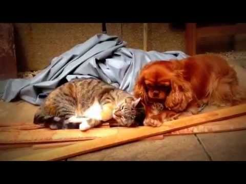 Animals In Love. Cat and Dogs relationship