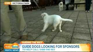 Guide Dogs Wa Part 2 | Today Perth News