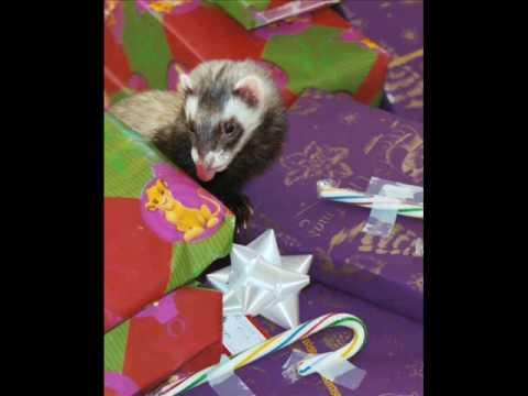 A Ferret Christmas