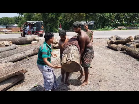 Yellow, Crooked, Difficult to Carry Wood Cutting at Logging Sawmill।Good Wood Slice for Furniture