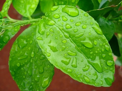 Foliar Feeding and Fertilizing your plants - Benefits and the science