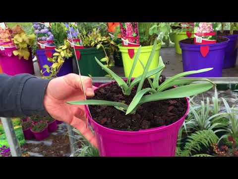 Wk 11 - 12th March 2018 Garden Centre Plants