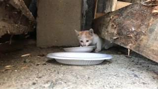 버려진 새끼 고양이Feeding abandoned kitten