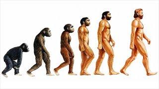 (VTC14)_Thổ Nhĩ Kỳ ngừng dạy thuyết tiến hóa của Darwin