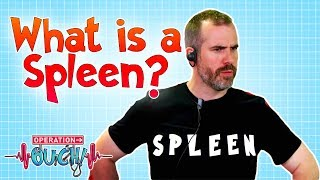 What Is a Spleen?   Operation Ouch   Science for Kids