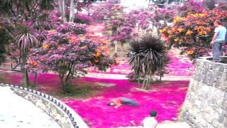 Parkour en mi COLOMBIA