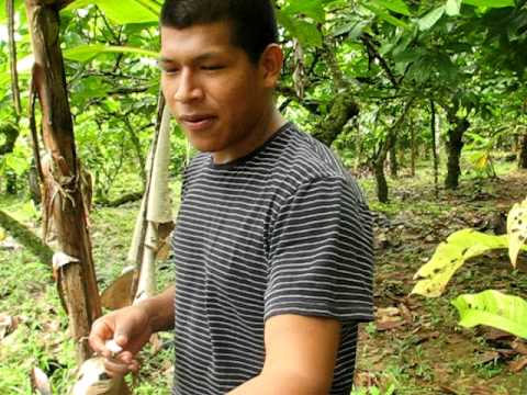 PRO WORLD ORGANIC FARMING PLACEMENT IN BOCAS DEL TORO, PANAMA