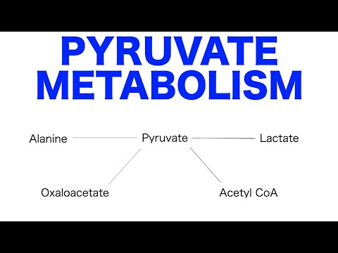 Pyruvate Pathways & Metabolism
