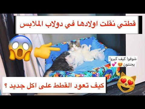 الملكة نقلت اولادها في دولاب الملابس😢 _ و كيف اخلي القطط تتقبل الاكل الجديد ؟/ Mohamed Vlog