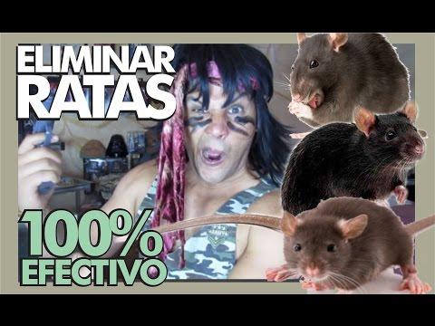 Veneno de ratas casero doovi - Como eliminar ratas en casa ...