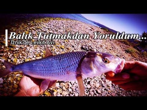İznik'de Bol Bol Levkit Balığı Avladım.1080p