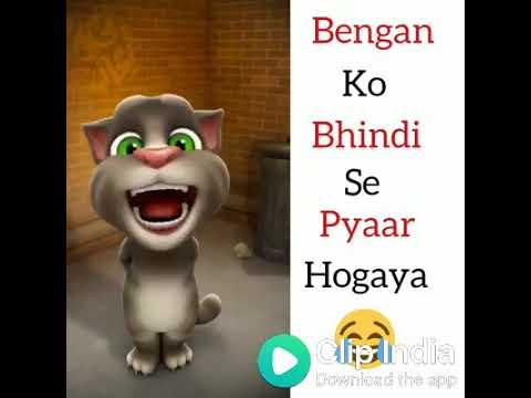 Love song of cat ( Ketan Mahakal ) funny