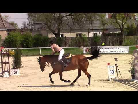 Weronika Wilska & Lady von Bayern 1.45 Grand Prix