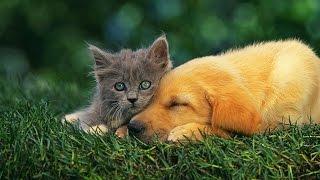 Любовь кошек и собак