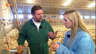 Was kostet ein Hähnchen?