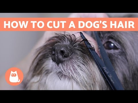 How to Cut a Dog's Hair?  BASIC GROOMING Tutorial