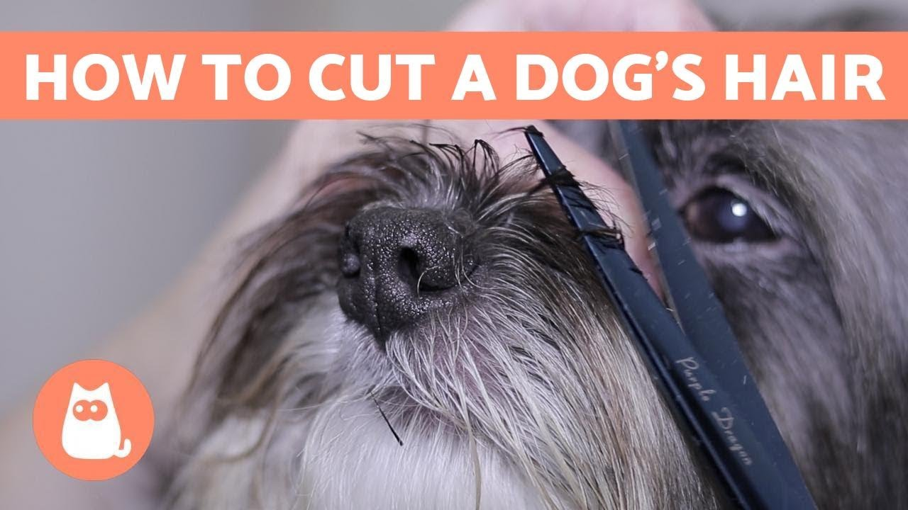 Can You Cut Dog Hair With Human Clippers? - Answered! - Barking