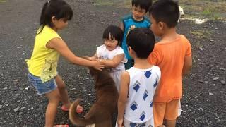 Stin Dâu Chơi Cùng Em Bé & Chú Chó Vàng (^_^). Buổi chiều chơi ngoài trời vui vẻ