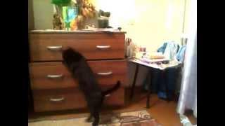 Что делают кошки, когда хозяева их не видят