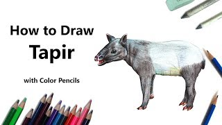 How to Draw a Tapir with Color Pencils [Time Lapse]