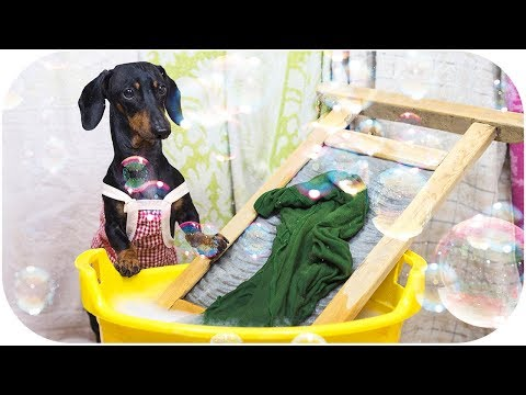 DOG or HUMAN? Who is better housekeeper? Funny animal video!