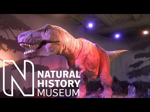 Awesome T Rex Dinosaur Animatronic at the Natural History Museum London
