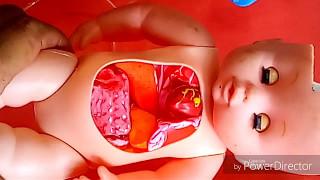 Maqueta con movimiento de corazon y pulmones
