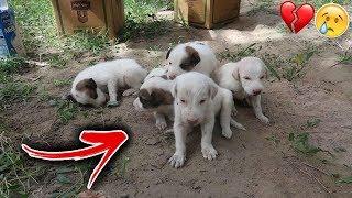 شخص يسرق كلاب صغار من امهم ويرميهم عند مزرعتنا !! والسبب
