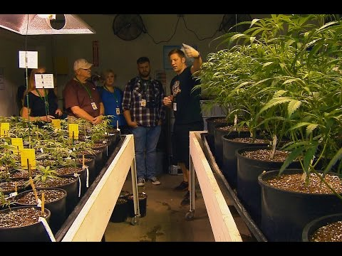 Seattle Marijuana Tourism, KING-TV Seattle, Evening