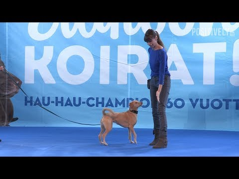 **NEW** How & Why To Teach Your Dog The 'Touch' Cue
