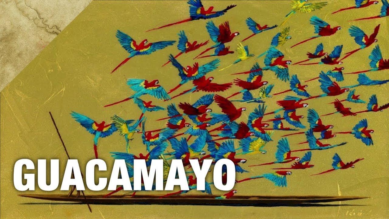 Danit Treubig - Guacamayo
