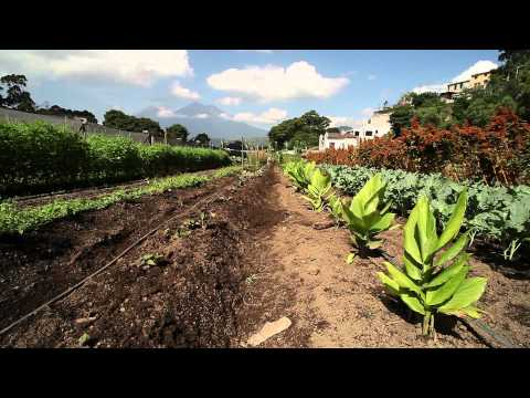 Sustaining the Life Of the Organic Farm (part 1) HD 720P