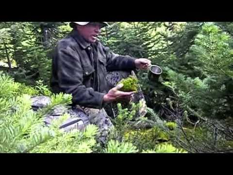 Outdoor Survival Tips - Water from Moss During a Complete Fire Ban in the Rocky Mountains