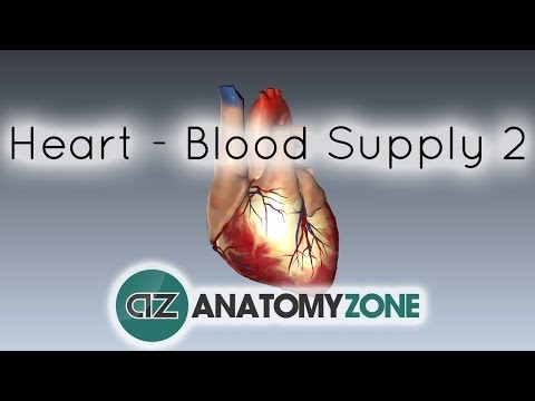 Blood supply to the heart - PART 2 - Anatomy Tutorial