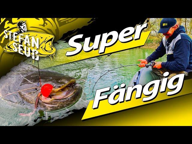 Dieses Angeln ist SUPER FÄNGIG | Welsangeln mit Fireball |Tauwurm und Köderfisch