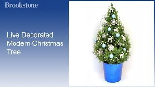 Live Decorated Modern Christmas Tree