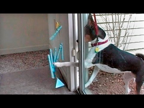 """Lucy the Basenji"" DVD - Rings Bell to Go Potty"