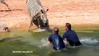 Лучшие видео о животных от Рейтер