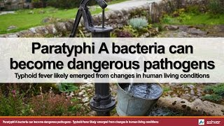 Paratyphi A bacteria can become dangerous pathogens - Typhoid fever likely emerged from changes ...