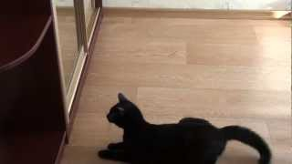 Cat attacking other cat