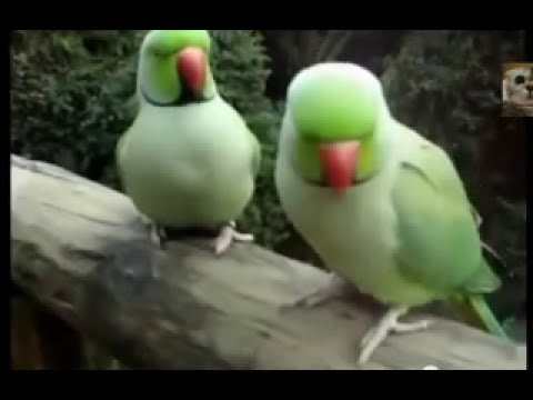 Best Bird Video Talking Parrots Dancing Cockatoos Singing Parrots Compilation