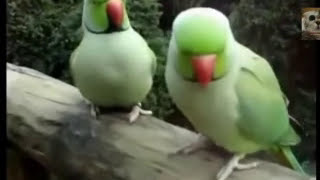 Best Bird Video Talking Parrots Dancing Cockatoos Singing Parrots Compilation